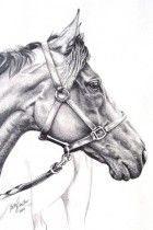Thoroughbred - For Sale Framed