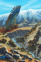 Kea on Patrol -