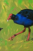 Pukeko Commission