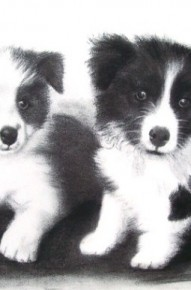 Border Collie Pups - Commission