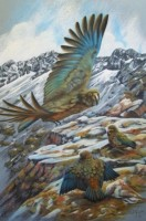 Kea - Introducing the Young - Pastel
