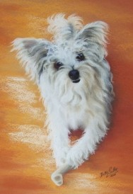Pet Dog portrait in Pastel