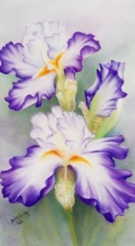 Beautiful Iris painting in pastel