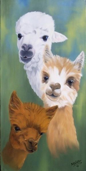 Birds For Sale >> Alpaca paintings